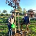 Baumspende für den Kurpark
