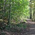 Im Herbst gute Luft atmen - Tipps für Lungenkranke