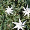 Sterne für das Stiftsmuseum - Bastelaktion für groß und klein
